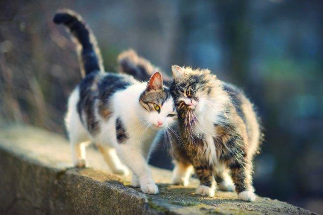 Kocie mruczenie pomaga nie tylko ludziom. Także... kotom.