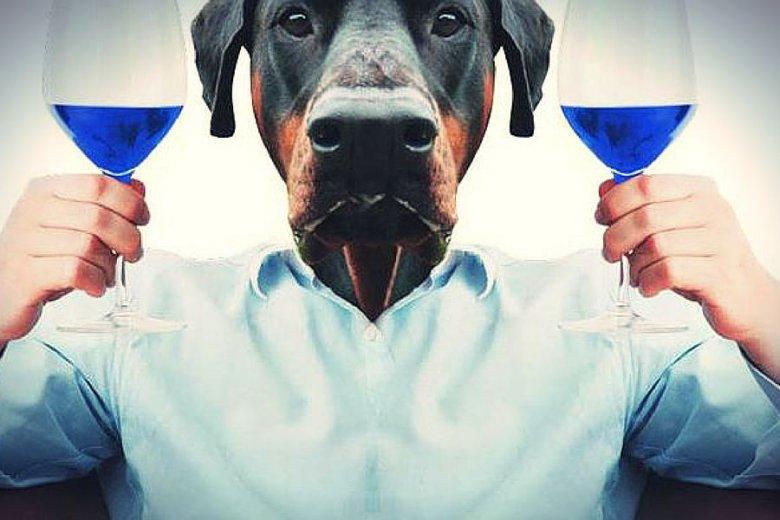 Dla użytkowników Instagrama niebieskie wino produkowane przez hiszpańską firmę Gik ma rangę fetyszu.