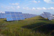 Tak wygląda farma słoneczna. Podobna padła łupem złodziei.
