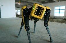 Robot Spot od Boston Dynamics może pomóc np. w branży budowlanej.