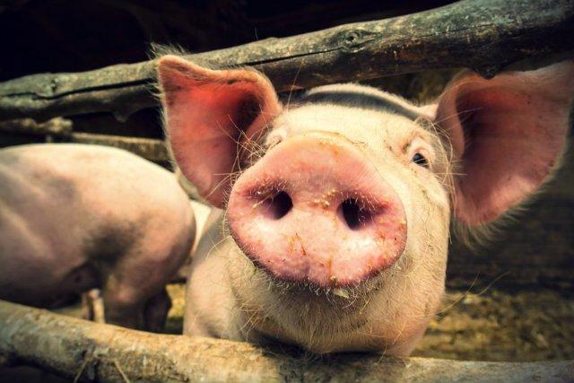 Polacy przestają też ufać w pochodzenie mięsa - szczególnie po aferze z konserwami z ASF