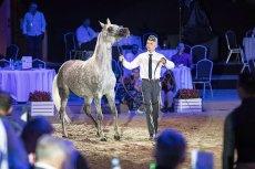 Słynna stadnina koni arabskich w Janowie Podlaskim w 2018 roku odnotowała 3 mln 273 tys. złotych straty. Wystarczyły cztery lata rządu PiS, by z dochodowej dotąd inwestycji znikło ok. 6,4 mln zł.