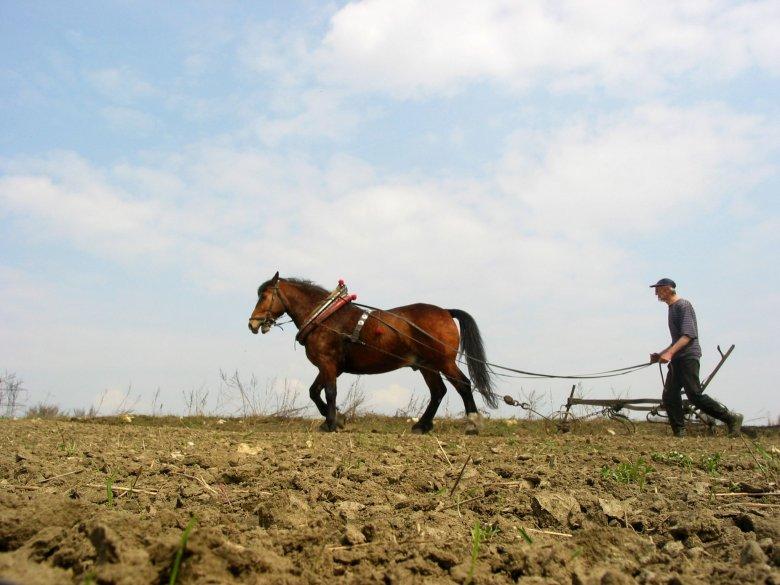 Rolnik udawał, że uprawiał ziemię, a w rzeczywistości dzierżawił ją komuś innemu. W ten sposób wyłudził 40 tys. zł z ARiMR.