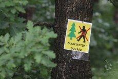 Z powodu suszy, w podwrocławskich nadleśnictwach zakazano wstępu do lasów.