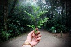 Ekologiczne życie z jednej strony wydaje się drogie, a z drugiej - tanie. Jak jest w rzeczywistości?