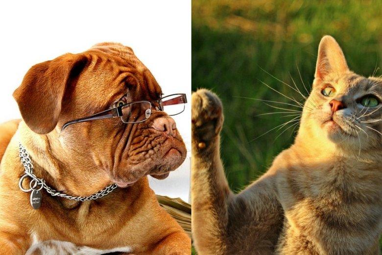Psy mają w korze mózgowej 530 mln neuronów, koty - dwukrotnie mniej.