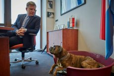 Psy odzwierciedlają osobowość właściciela? Naukowcy potwierdzają.