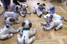 W tokijskiej kawiarni Penguin Cafe co sobota odbywa się spotkanie mechanicznych psów Aibo i ich właścicieli.