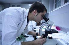 Lek produkowany z kasztana może niedługo zrewolucjonizować medycynę