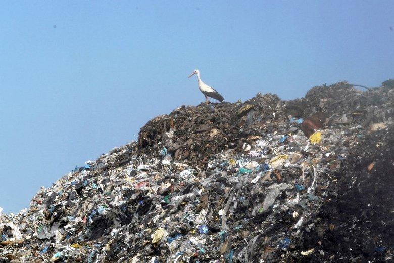 Instalacje termicznego przekształcania odpadów, czyli tzw. spalarnie śmieci, jednak mogą być częścią gospodarki komunalnej - twierdzą rządzący.