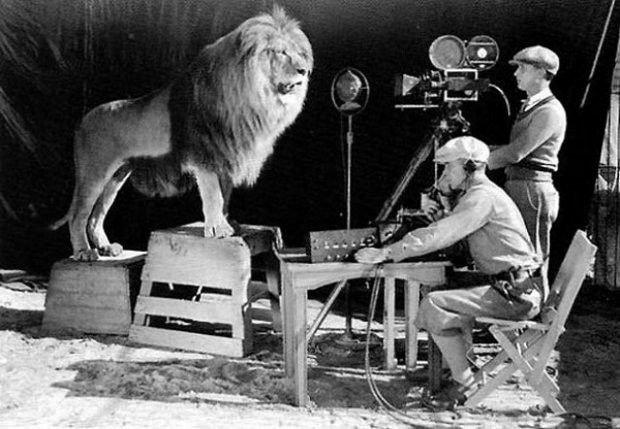 Zdjęcie zostało wykonane w 1928 roku i przedstawia filmowanie lwa, który występuje w czołówce i logo MGM.