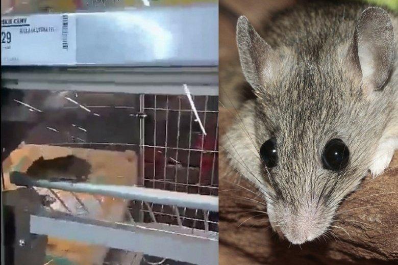 W Biedronce w Sieradzu klienci zauważyli mysz. Nie pierwszy to taki przypadek w Polsce.