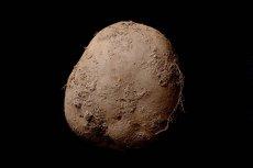 Za to zdjęcie ziemniaka irlandzki fotograf Kevin Abosch otrzymał zapłatę w wysokości 1 mln euro