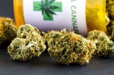 Medyczna marihuana wyprzedała się w Polsce w ciągu kilku dni. Następna partia trafi do aptek za dwa tygodnie.