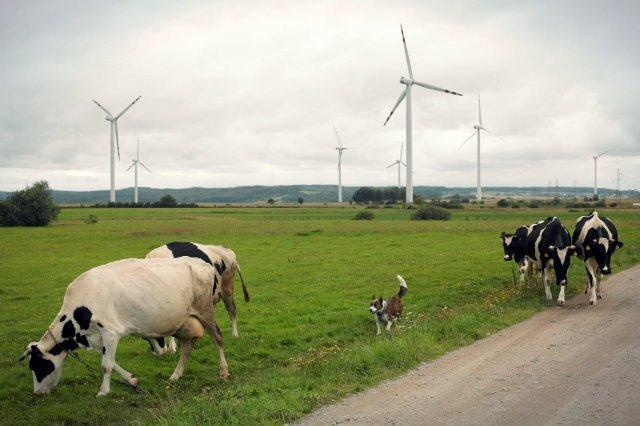 """Gdyby stworzyć w Polsce odpowiednie warunki, odnawialne źródła energii mogłyby w naszym kraju """"hulać""""."""