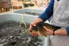 Duże sieci handlowe rezygnują ze sprzedaży żywego karpia.
