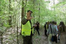 W Puszczy Białowieskiej szykują się kolejne potężne wycinki