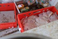 900 kilogramów skażonego fipronilem mięsa zdążyło trafić do rąk konsumentów.