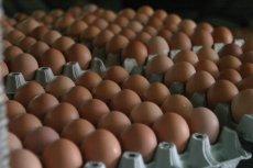 Wyprodukowanie pojedynczego testu diagnostycznego nowotworu dzięki wykorzystaniu żółtka z kurzych jaj może kosztować mniej niż złotówkę. Z kolei dziś ta kwota wynosi ponad 30 złotych.