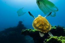 Plastikowe torby zaśmiecają dziś ziemię i oceany. Tymczasem w zamyśle twórcy miały chronić planetę.
