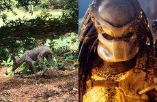 Mieszkaniec Karoliny Południowej zakładał, że sfotografował chupacabrę