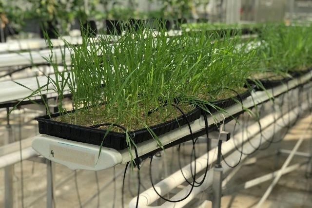 Oprócz rolnictwa, technologię IL można zastosować w naprawdę wielu dziedzinach życia - od antybakteryjnej deski sedesowej po wolną od zarazków obudowę na smartfon.