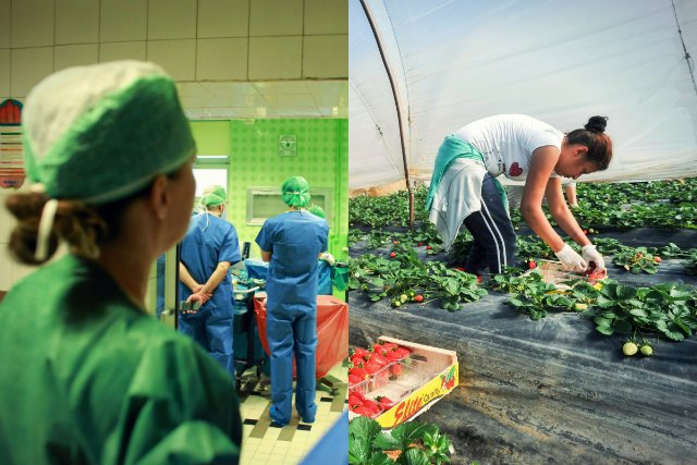 Uczelnia w Lublinie na swojej stronie do zakładki z ofertami pracy wrzuciła propozycję zbierania truskawek w Holandii