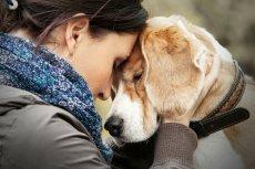 Psy wyczuwają emocje właścicieli i w sytuacjach kryzysowych ruszają im z odsieczą. To reguła, a nie romantyczna bajka - dowodzą badacze.