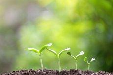 Chcesz żyć bardziej ekologicznie, ale nie wiesz, od czego zacząć? Upewnij się, że korzystasz z tych rad.