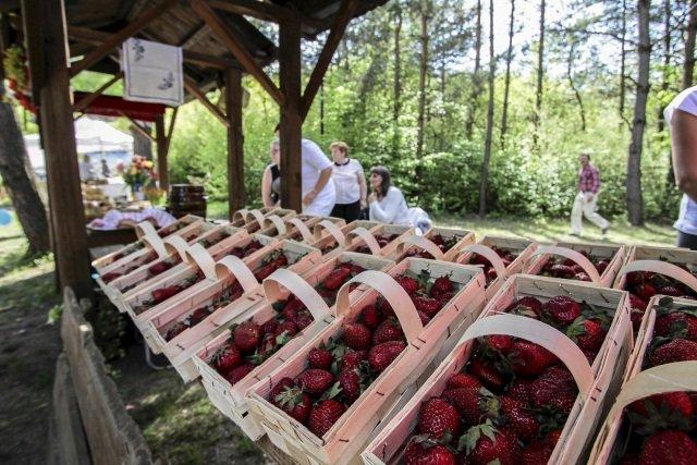 W sprzedaży są już krajowe, tegoroczne truskawki. Kosztują 12 - 19 zł za kilo