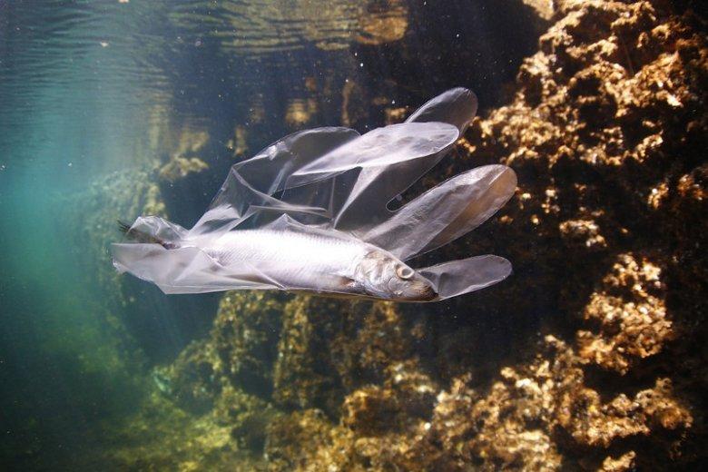 Zanieczyszczone plastikowymi odpadami morza i oceany stają się toksycznym środowiskiem dla ryb i innych zwierząt wodnych