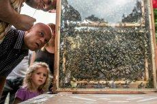 Miód to mieszanka nektaru i pszczelich wymiocin. Ale przynajmniej się nie starzeje.