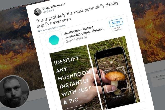 Na całym świecie triumfy święci aplikacja do rozpoznawania gatunków grzybów na podstawie zdjęcia. Lepiej jej nie ufać!