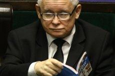 """Kaczyński lubi określać się jako miłośnik zwierząt, zrobił furorę przeglądając w sejmowej ławie """"Atlas kotów""""."""