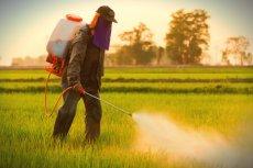 Naukowcy z Uniwersytetu Warszawskiego opracowali metodę, która znacznie ograniczy opryski i mineralne nawożenie gleb