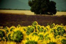 Powstała Polska Platforma Technologiczna Biogospodarki