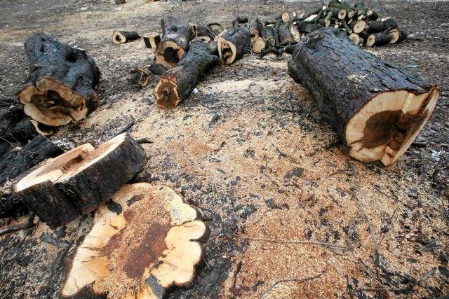Na jednej z działek na warszawskiej Saskiej Kępie wycięto wszystkie drzewa. Następnego dnia została wystawiona na sprzedaż
