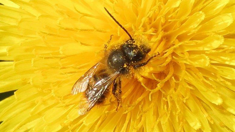 Minister Teresa Czerwińska ma słabość do miodu. Przed resortem finansów stanie kilka uli, by uświadamiać, jak bardzo pszczoły potrzebne są środowisku.
