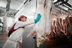 Zajadamy się mrożoną wieprzowiną z importu, bo świeża z Polski jest dla nas za droga