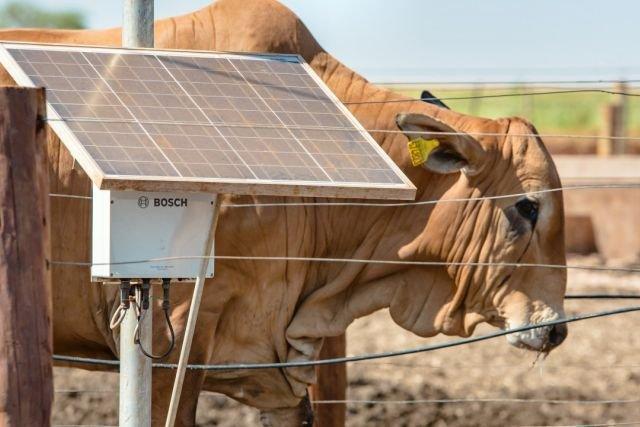 System do automatycznego ważenia krów. Bosch wdrożył takie rozwiązanie na farmie w Brazylii