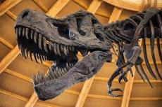 Dinozaury żyły pod zupełnie innym niebem niż ludzie.