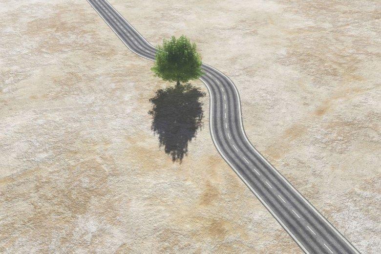 W miastach pozbywamy się starych drzew. Tymczasem tylko one dają chłodny cień i produkują mnóstwo tlenu.