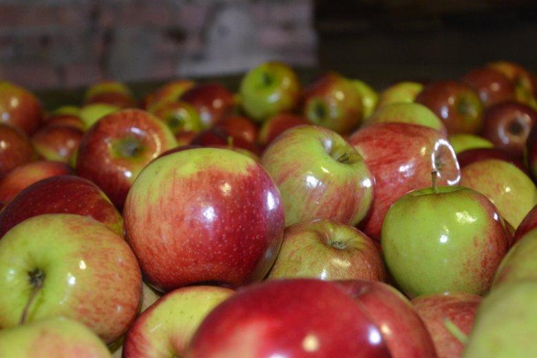 Polska jest największym na świecie eksporterem jabłek.