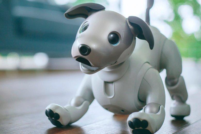 Aibo to inteligentny robot-pies, który na bieżąco uczy się nowych zachowań