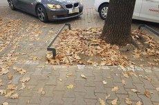 Niskie metalowe barierki mają blokować auta przed rozjeżdżaniem zieleni