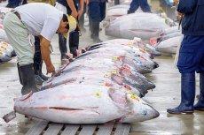 Europol zatrzymał 45 ton podrabianego mięsa z tuńczyka