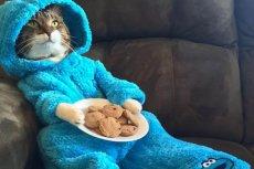 Ambasada USA w Canberrze omyłkowo wysłała e-mailowe zaproszenia z kotem w piżamie.