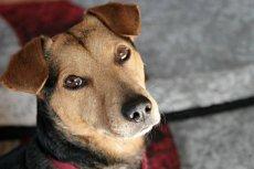 Pies to nie zabawka. Musimy nie tylko zadbać o jego utrzymanie, ale też opiekę.