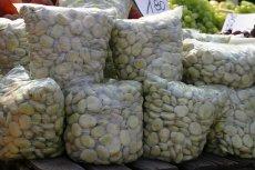 Plantatorzy bobu zacierają ręce, jego ceny są najwyższe od lat