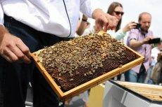 Sporej części miodu w polskich sklepach nie wytworzyły pszczoły